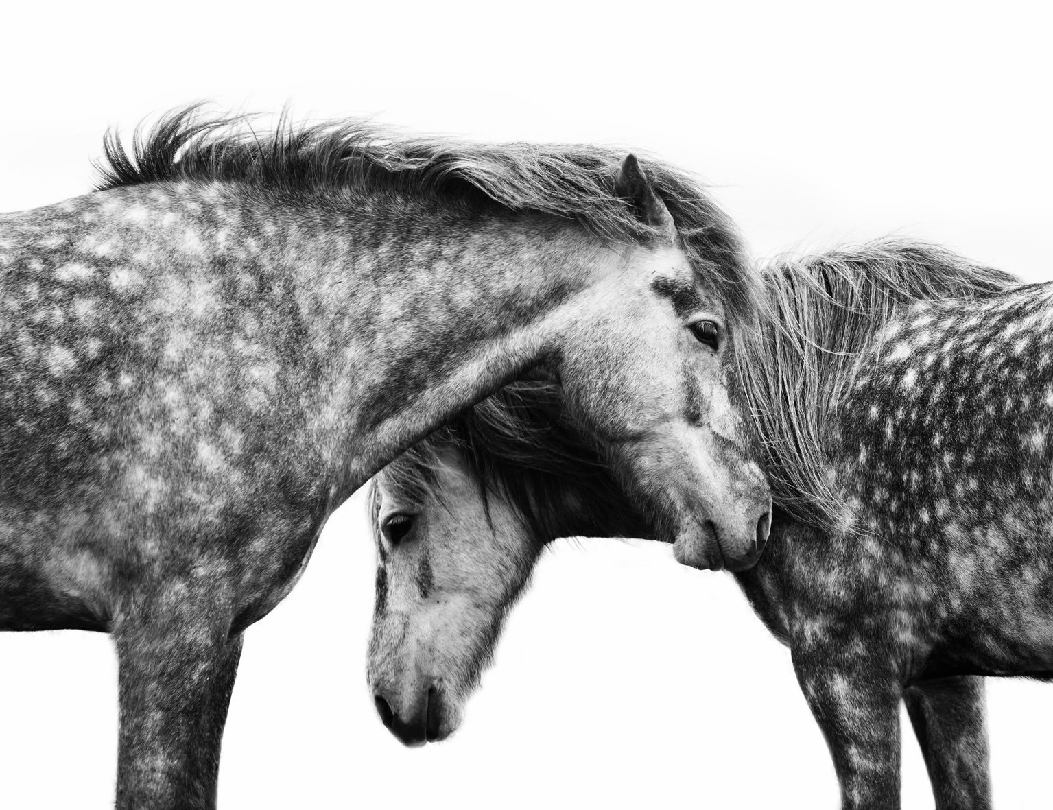 Spotted Horses
